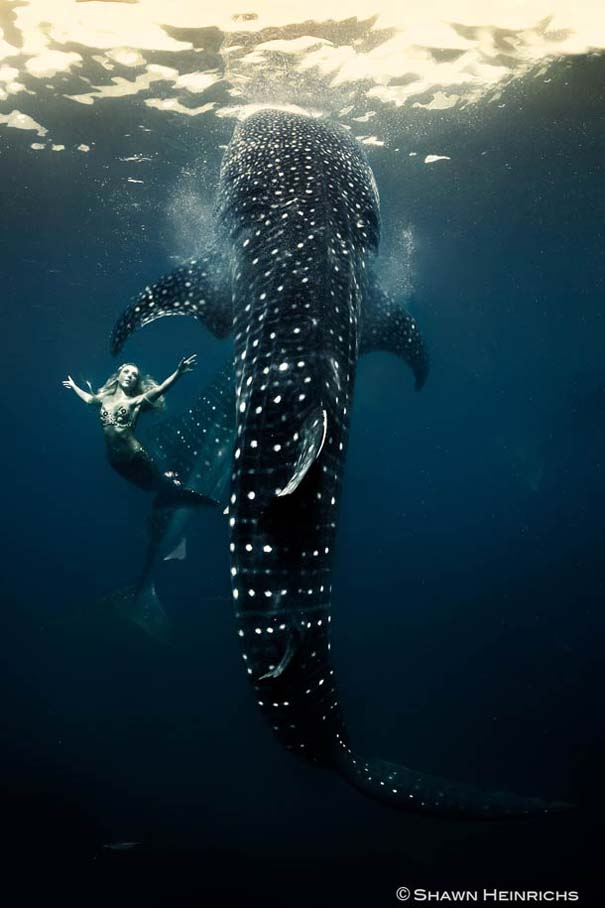 Χορεύοντας με τις φάλαινες (8)