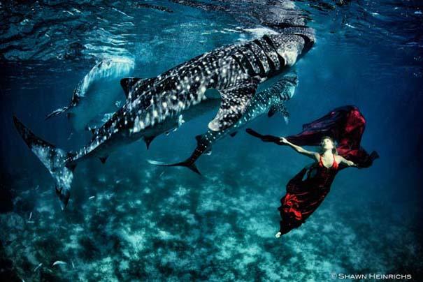 Χορεύοντας με τις φάλαινες (9)