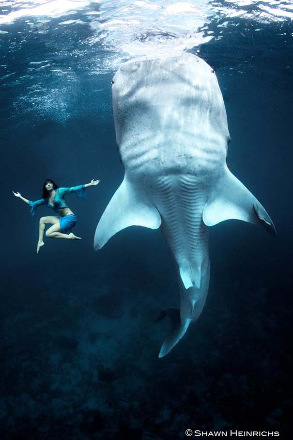 Χορεύοντας με τις φάλαινες (10)