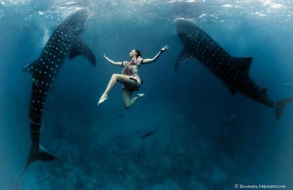 Χορεύοντας με τις φάλαινες (12)