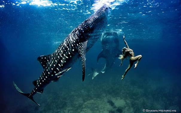 Χορεύοντας με τις φάλαινες (14)