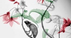Ακτινολόγος δίνει υπέροχα χρώμα σε ακτινογραφίες της φύσης