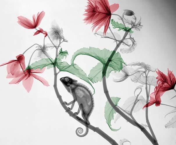 Ακτινολόγος δίνει υπέροχα χρώμα σε ακτινογραφίες της φύσης (1)