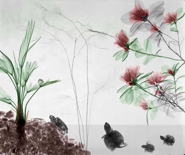 Ακτινολόγος δίνει υπέροχα χρώμα σε ακτινογραφίες της φύσης (6)