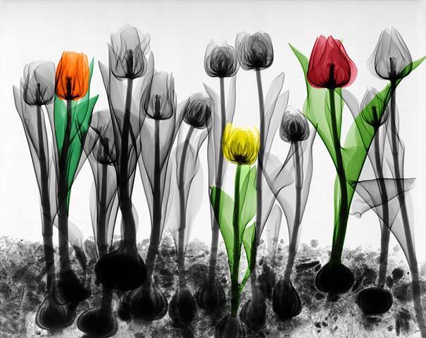 Ακτινολόγος δίνει υπέροχα χρώμα σε ακτινογραφίες της φύσης (7)