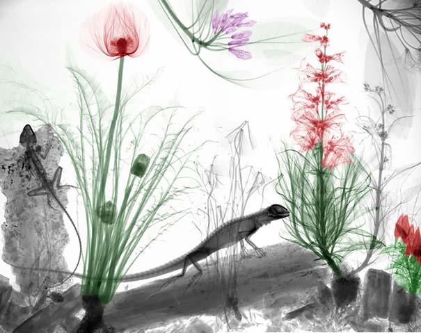 Ακτινολόγος δίνει υπέροχα χρώμα σε ακτινογραφίες της φύσης (4)