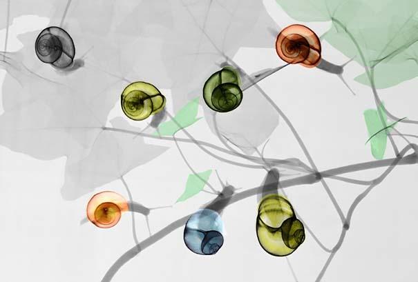 Ακτινολόγος δίνει υπέροχα χρώμα σε ακτινογραφίες της φύσης (3)