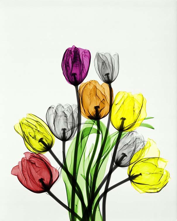 Ακτινολόγος δίνει υπέροχα χρώμα σε ακτινογραφίες της φύσης (2)