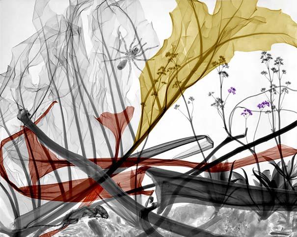 Ακτινολόγος δίνει υπέροχα χρώμα σε ακτινογραφίες της φύσης (16)