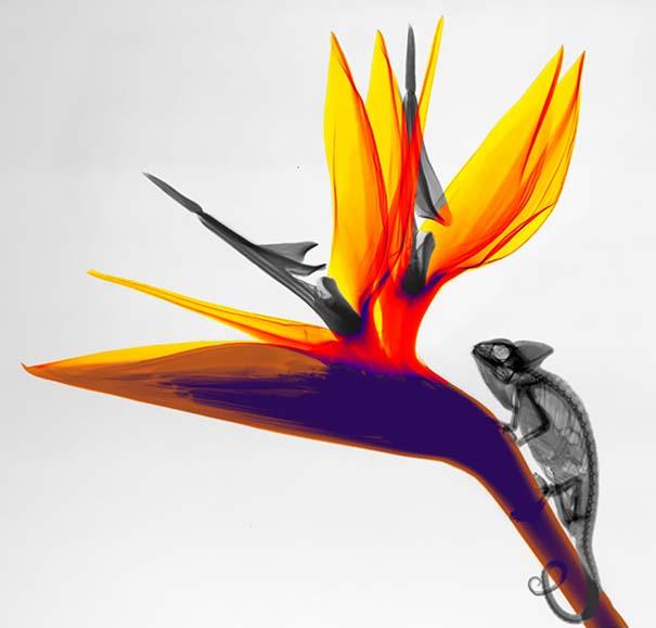 Ακτινολόγος δίνει υπέροχα χρώμα σε ακτινογραφίες της φύσης (20)