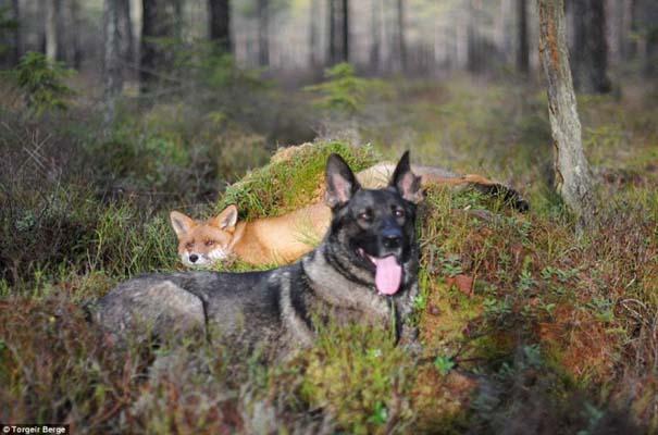 Η Αλεπού και το Λαγωνικό: Όταν το παραμύθι παίρνει σάρκα και οστά (4)