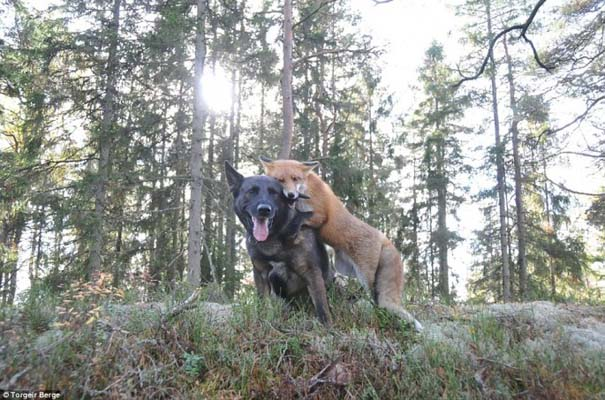 Η Αλεπού και το Λαγωνικό: Όταν το παραμύθι παίρνει σάρκα και οστά (5)