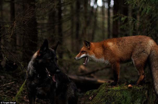 Η Αλεπού και το Λαγωνικό: Όταν το παραμύθι παίρνει σάρκα και οστά (6)