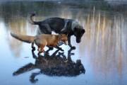 Η Αλεπού και το Λαγωνικό: Όταν το παραμύθι παίρνει σάρκα και οστά (7)