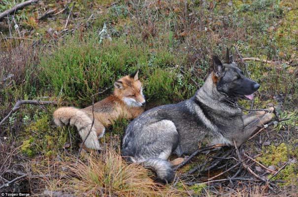 Η Αλεπού και το Λαγωνικό: Όταν το παραμύθι παίρνει σάρκα και οστά (8)