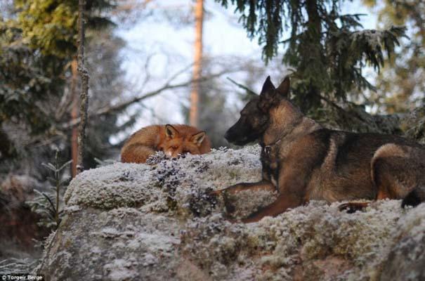 Η Αλεπού και το Λαγωνικό: Όταν το παραμύθι παίρνει σάρκα και οστά (9)