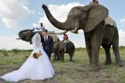 Ένας απίθανος γάμος στη Ζιμπάμπουε (1)
