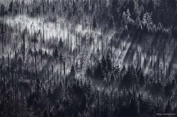 Δάσος με σύννεφα (1)