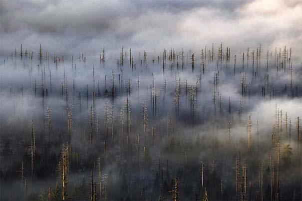 Δάσος με σύννεφα (2)