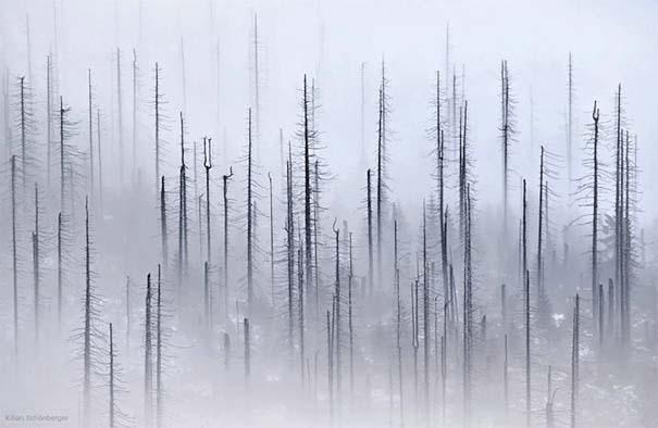 Δάσος με σύννεφα (3)