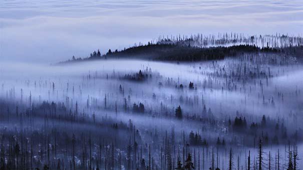 Δάσος με σύννεφα (5)
