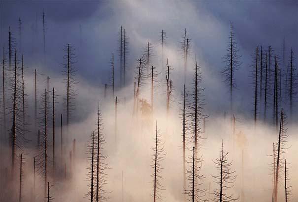 Δάσος με σύννεφα (6)