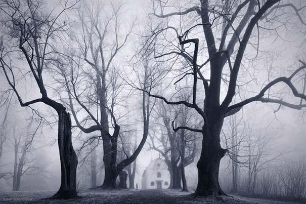 Δάσος με σύννεφα (7)