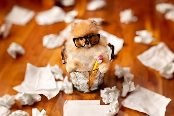 Flint: Ένα φωτογενές Pomeranian που θα σας κάνει να λιώσετε (8)