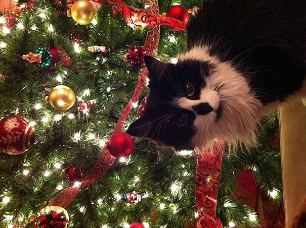 Γάτες εναντίον χριστουγεννιάτικων στολισμών