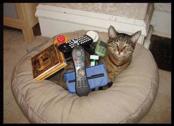 Γάτες που απλά δεν τις νοιάζει πια... (2)