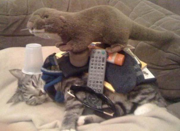 Γάτες που απλά δεν τις νοιάζει πια... (4)