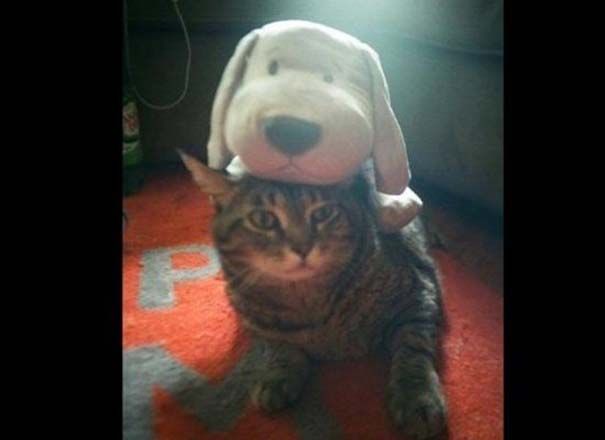 Γάτες που απλά δεν τις νοιάζει πια... (5)