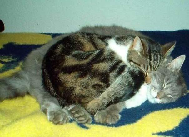 Γάτες που απλά δεν τις νοιάζει πια... (9)