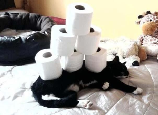 Γάτες που απλά δεν τις νοιάζει πια... (11)