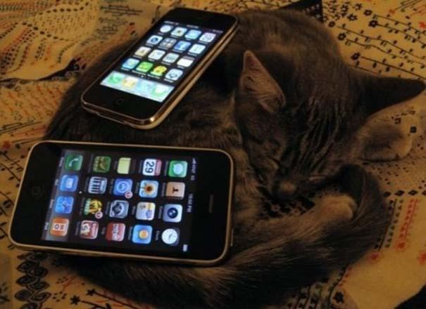 Γάτες που απλά δεν τις νοιάζει πια... (12)
