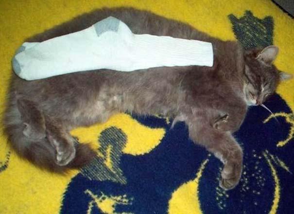 Γάτες που απλά δεν τις νοιάζει πια... (13)