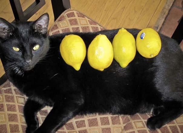Γάτες που απλά δεν τις νοιάζει πια... (14)