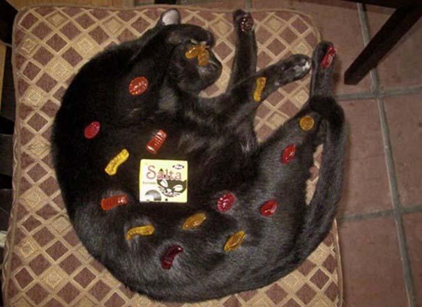 Γάτες που απλά δεν τις νοιάζει πια... (15)
