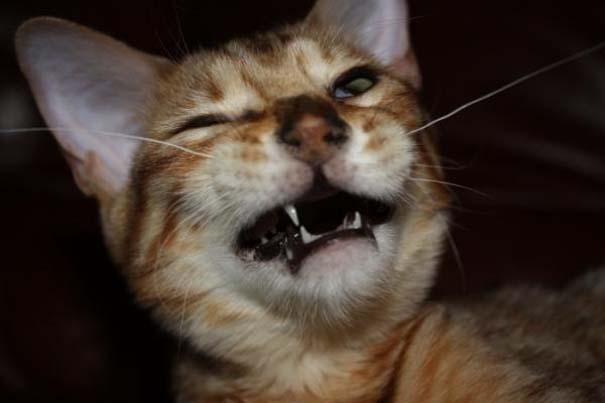 Γάτες που πιάστηκαν πάνω στο φτέρνισμα (5)