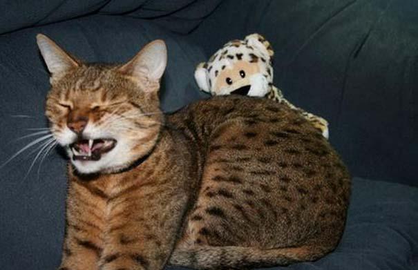 Γάτες που πιάστηκαν πάνω στο φτέρνισμα (10)