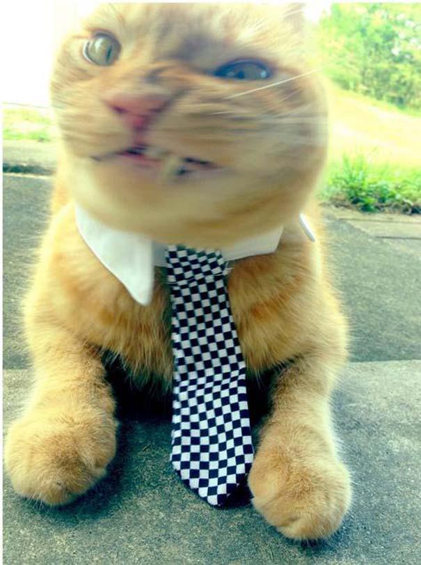 Γάτες που πιάστηκαν πάνω στο φτέρνισμα (11)