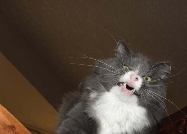 Γάτες που πιάστηκαν πάνω στο φτέρνισμα (17)