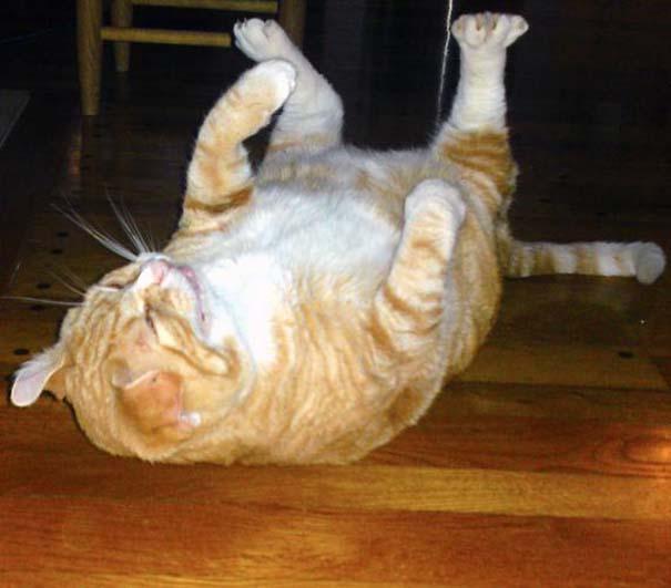 Γάτες που πιάστηκαν πάνω στο φτέρνισμα (19)