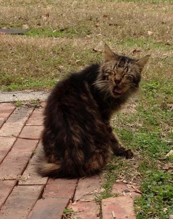Γάτες που πιάστηκαν πάνω στο φτέρνισμα (21)