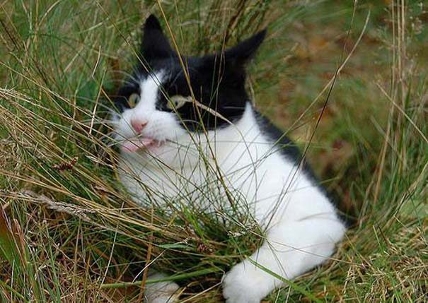 Γάτες που τα έχουν χαμένα (5)