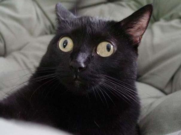 Γάτες που τα έχουν χαμένα (6)