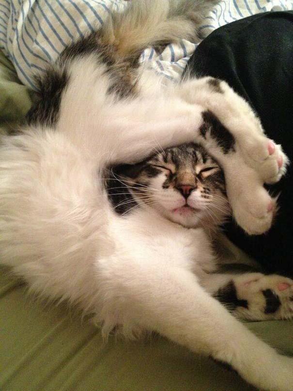 Γάτες που τα έχουν χαμένα (9)