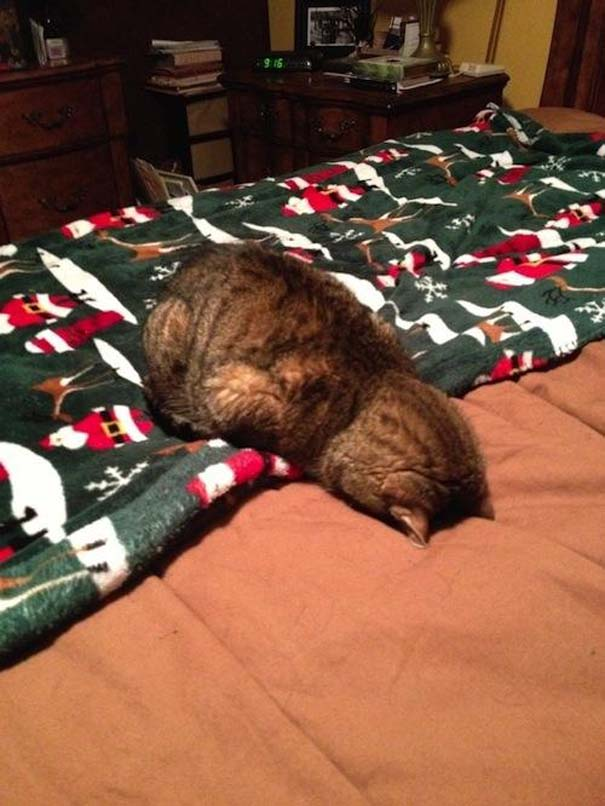 Γάτες που τα έχουν χαμένα (17)