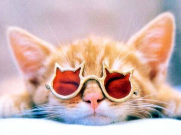 Πείθοντας τον Noah να φορέσει γυαλιά (4)