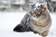 Γυναίκα κλώτσησε χιόνι σε γάτα, το μετάνιωσε πικρά (1)